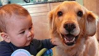 Dogs Loyalty to Baby Compilation