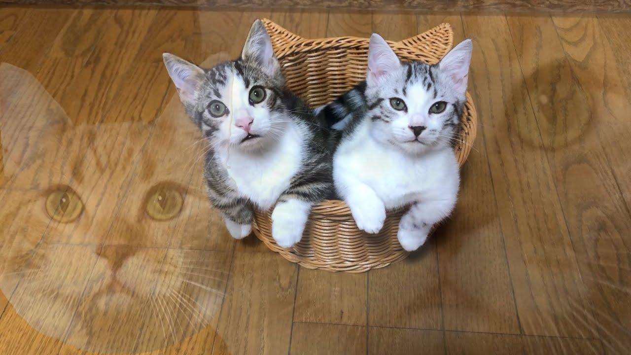 猫が多いので個別紹介します【猫多頭飼育】