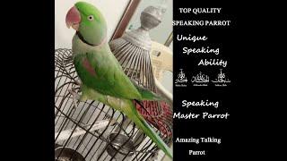Talking Parrot Raw Alexandrine - ALLAH HU | SUBHAN ALLAH | KYA HUA HAi |