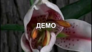 ФУТАЖ РАСПУСКАЮЩИЕСЯ ЦВЕТЫ ДЕМО