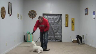 #1 Fear Biting Dog Being Obedience Trained - Trust Exercise