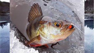 ЗИМНЯЯ РЫБАЛКА 2020 2021 ПРОДОЛЖАЕТСЯ WINTER FISHING 2020 2021 CONTINUES