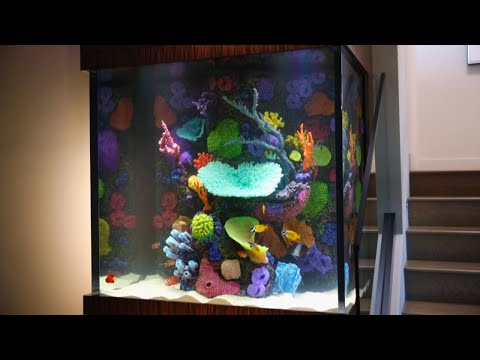 This Fish Tank Is Ludacris! | Tanked