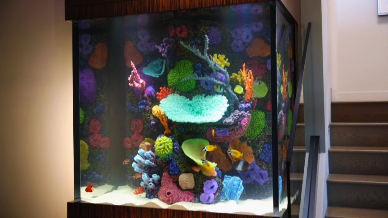 this fish tank is ludacris tanked youtube. Black Bedroom Furniture Sets. Home Design Ideas