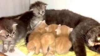 Котята 5 недель. Кушают, спят и растут.......