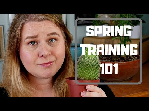 Spring Training 101 - Baseball Basics