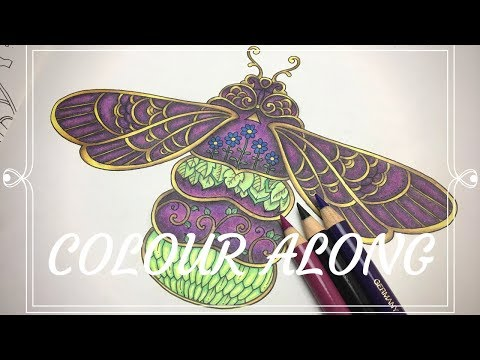 ivy-and-the-inky-butterfly-|-colour-along|-polychromos