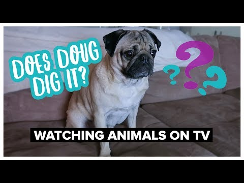 Does Doug Dig It? - Watching Animals on TV