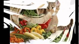 сухой корм для кошек дешево(http://urlid.ru/c17g Лучший Интернет-магазин Enter зоотоваров в рунете. Заходите!, 2014-10-26T09:44:24.000Z)