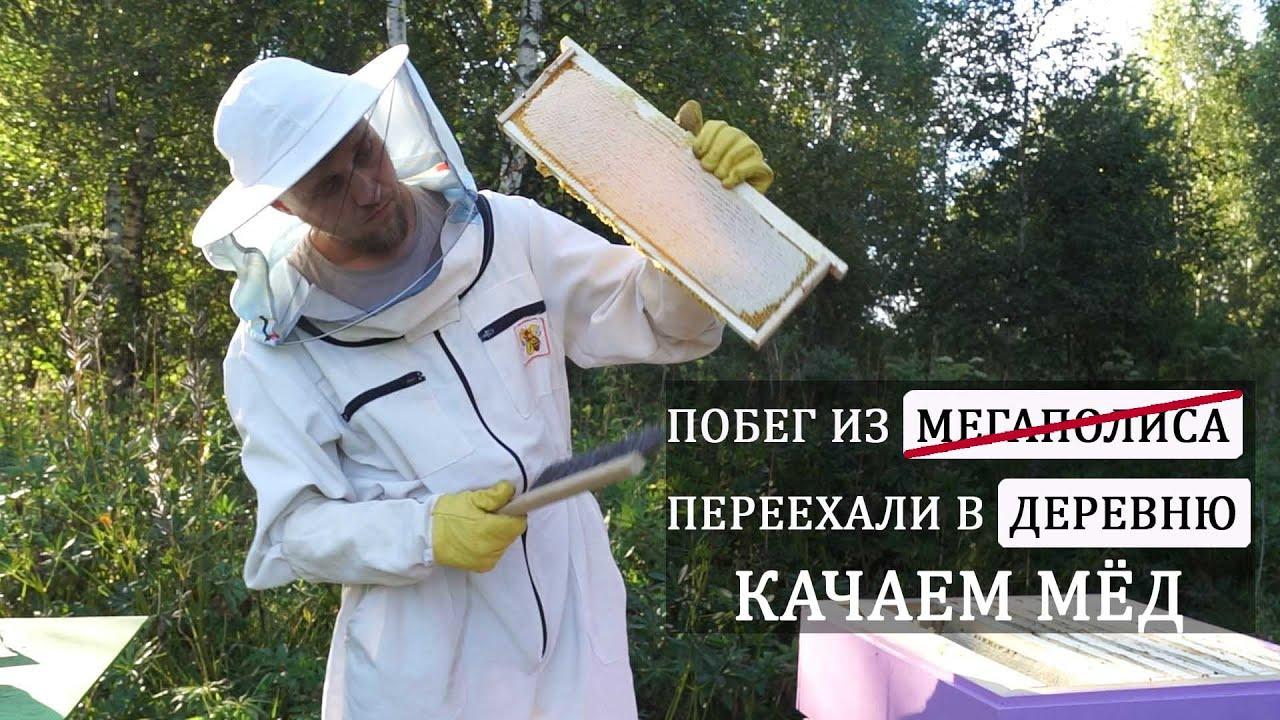 Сколько мёда принесли наши пчёлы.