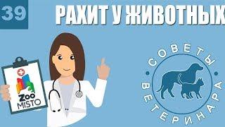 Рахит у животных | Причины рахита | Симптомы и лечение болезни | Советы Ветеринара