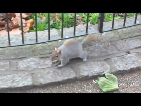 St. James's Park, London (HD)