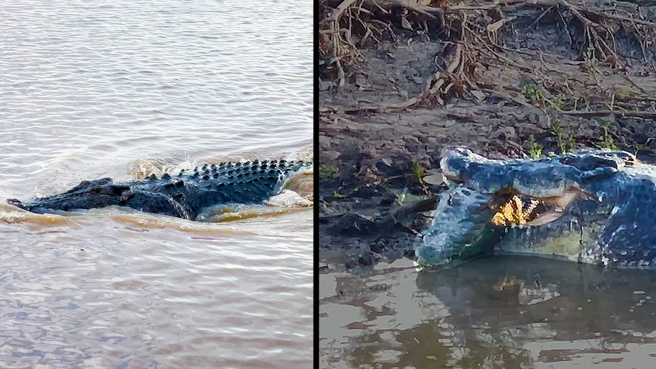 Ozzy Man Reviews: Crocodile Eats Crocodile