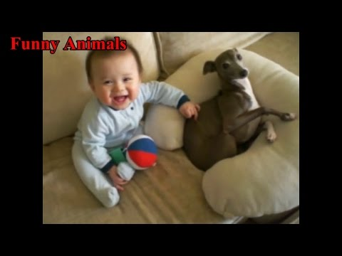 Italian Greyhound Dog Play With Baby videos – Dog Loves Baby – Funny Dogs Compilation