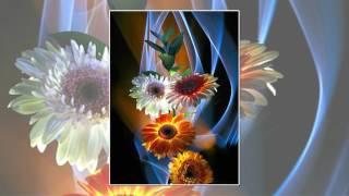 Фотографии цветов в стиле светографики.