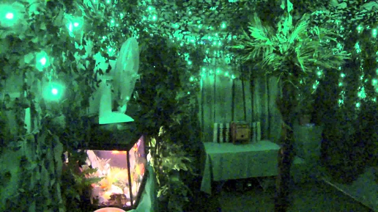Décor Jungle DECOTIM - YouTube