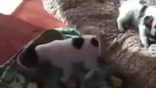 Try not To Laugh Funny Animals complication (2019)