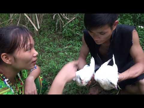 Survival skills: Primitive trap catch bird - Yummy cooking bird - Eating delicious