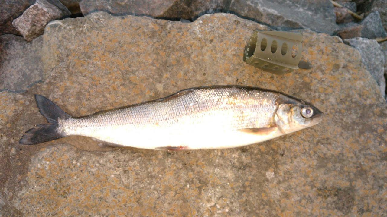 зимняя рыбалка в беларуси на щуку