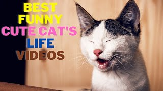 Best Funny Cat's and Dog's Life Videos    FunMaza
