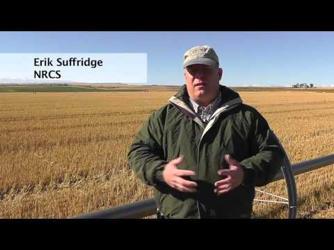 Year-Round Cattle Grazing, organic soil amendment, Soil Health