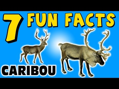 7 FUN FACTS ABOUT CARIBOU! FACTS FOR KIDS! REINDEER FACTS! Snow! Learning Colors! Funny Sock Puppet!