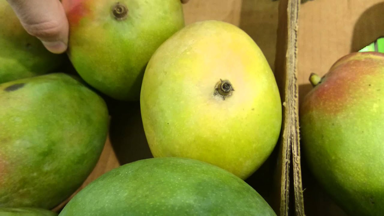How To Tell If Mango Is Ripe  One Thing You Didn't Knew About Mango