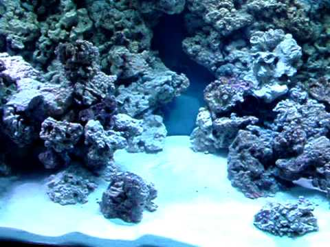 3d Fish Tank Wallpaper Reef Tank Rock Wall Build Youtube