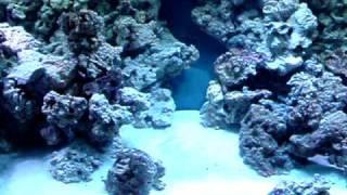 Reef Tank Rock Wall Build