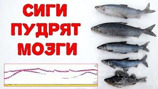 Ловля сига в Карелии 2021 Рыбалка на Онежском озере с эхолотом Deeper