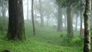 beautiful Nandi Hills,