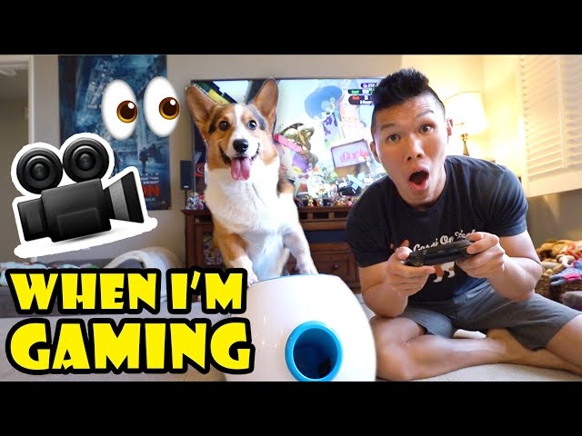 Didn't Know My Corgi Dog is So Busy While Gaming? || Life After College: Ep. 638