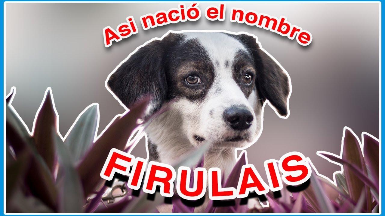 Firulais Origen Del Nombre Y No Es Por Firulais El Perro De Rugrats