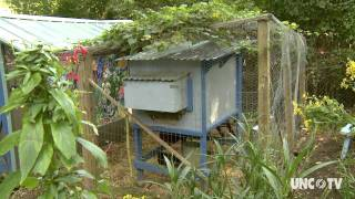 NC Now   Backyard Chickens   UNC-TV