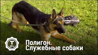 Служебные собаки | Полигон | Т24