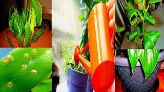 видео Уход за комнатными растениями
