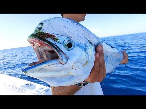 Weed Line Dolphin (Mahi Mahi) Fishing Tips In The Florida Keys