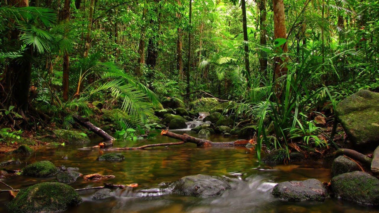 Muhteşem Mevsimler Belgeseli - Doğa - Hayvanlar - Orman