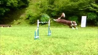 今回は80cmジャンプをパラパラマンガチックにしてみました(^J^) 画像...