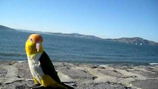 Parrot & Sea- trip to SF on a white hot day!!!