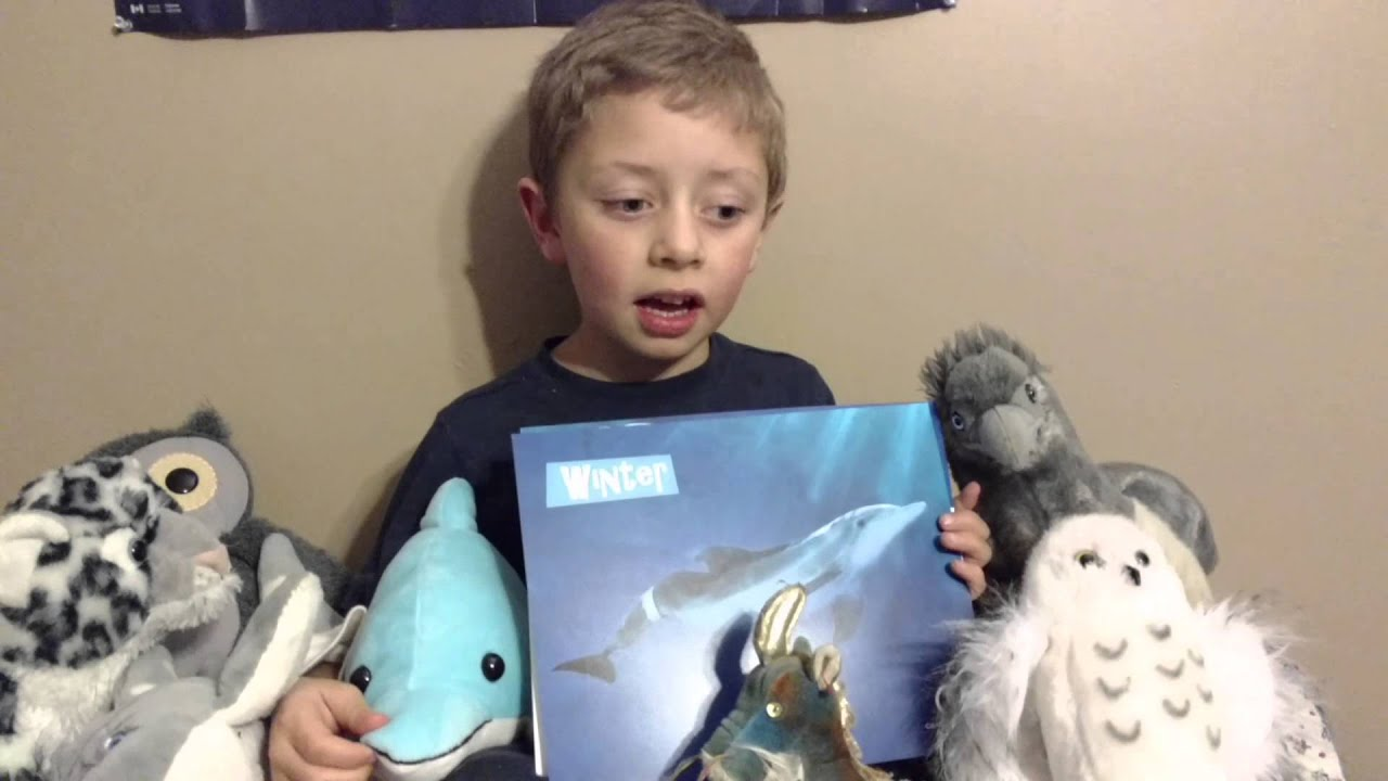 Gabe And Winter The Dolphin Stuffed Animal Youtube