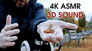 4K Pure Binaural 3D Relaxing ASMR Sounds for Sleep (Outside in Park)