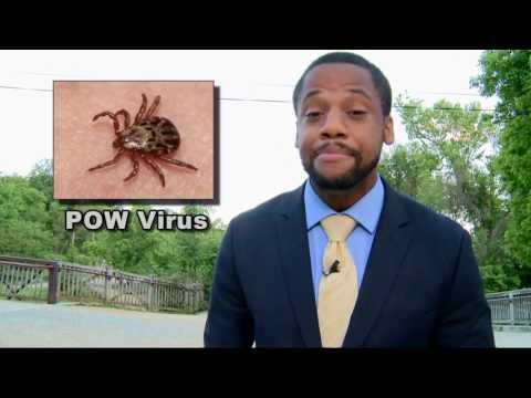 Ticks Carrying A Virus Dangerous To Humans
