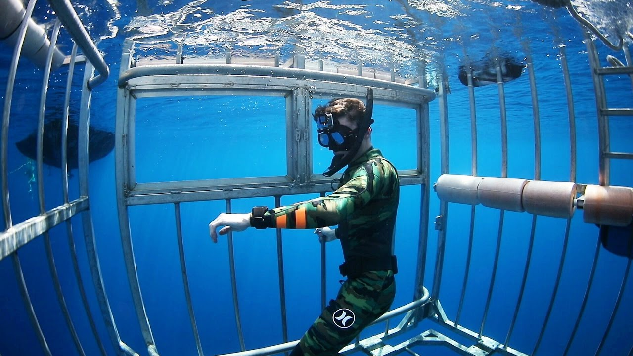 Swimming with Sharks Outside the Shark Cage! - Hawaii (Open Ocean) | DALLMYD image