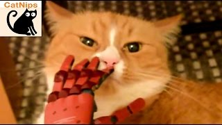 Cat Loves Being Pet With Metal Gear Solid Hand | CatNips
