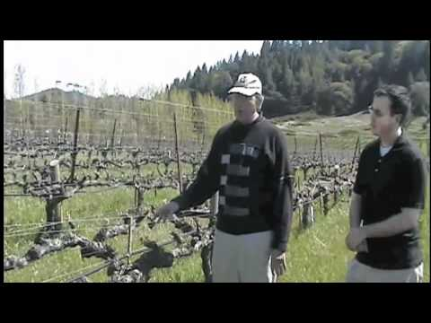 Part 1 - Organic wine vs. Wine from Organically Grown Grapes