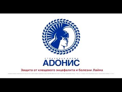 Адонис страховая компания официальный сайт нижний новгород статейное продвижение самостоятельно как
