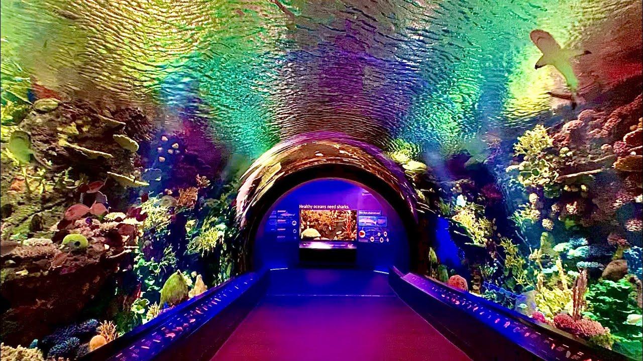 New York Aquarium Cinematic Walkthrough