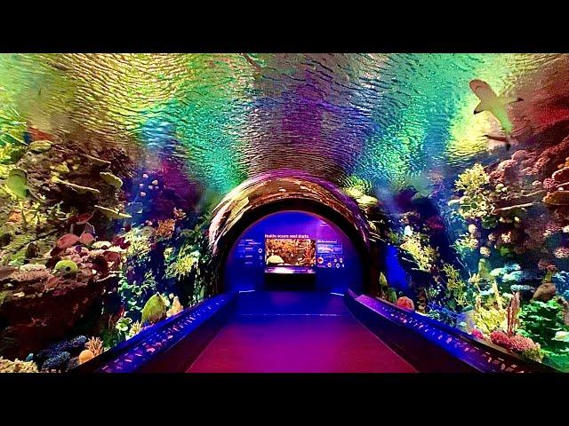New York Aquarium Cinematic Walkthrough Tour NY Coney Island NYC Reef and new Shark Exhibit