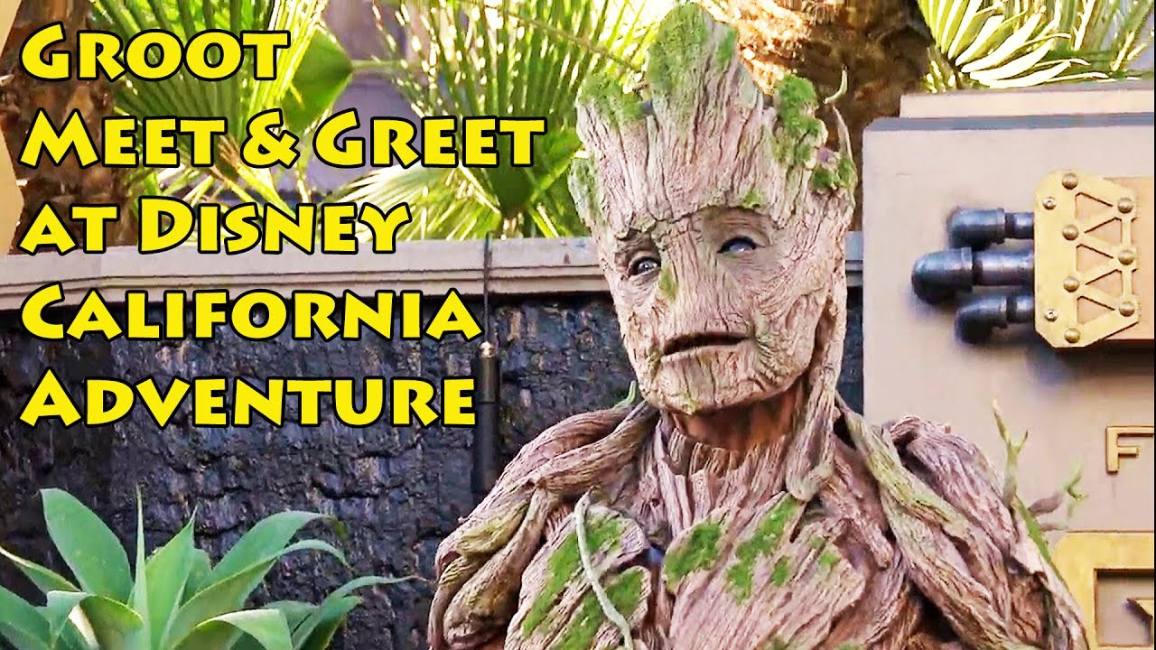 Full size groot character meet greet at disneyland summer of full size groot character meet greet at disneyland summer of heroes guardians of the galaxy m4hsunfo